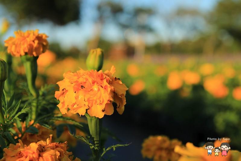 2017花在彰化溪州公園 159