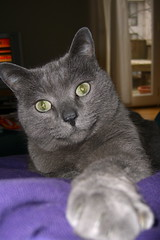 Artemis' paw