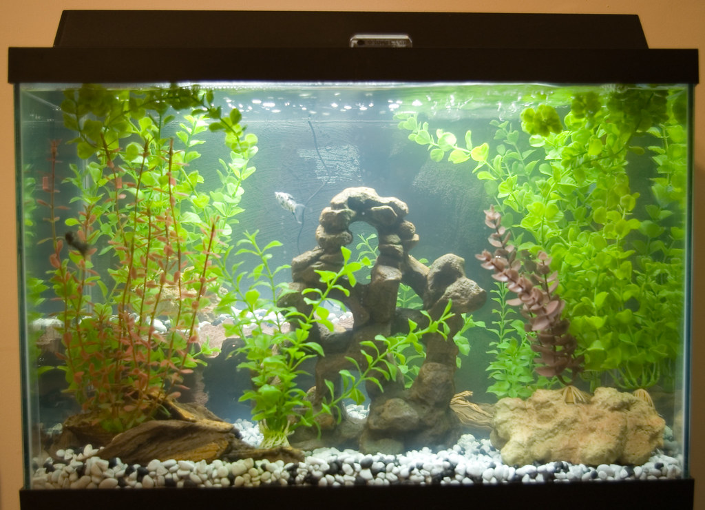 Gallon Glass Aquarium Uk