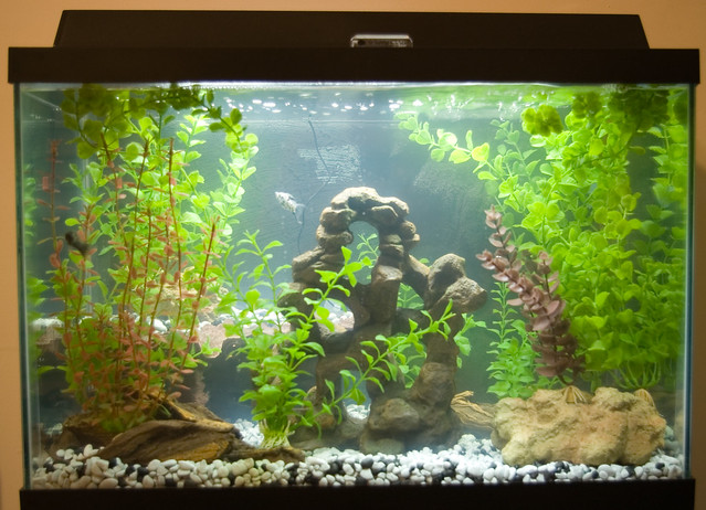 Our New Fish Tank Flickr - Photo Sharing!