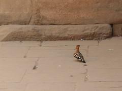 Weird Beak bird