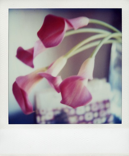 weekend polaroid #20