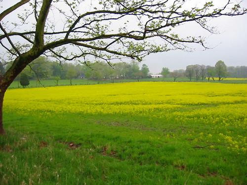 Impressionistic field