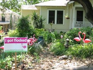 flamingos_for_downer_06May2006_007
