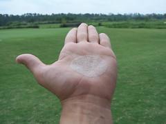 arm(0.0), soil(0.0), barefoot(0.0), leg(0.0), foot(0.0), human body(0.0), toe(0.0), hand(1.0), finger(1.0), grass(1.0), limb(1.0), lawn(1.0), thumb(1.0),