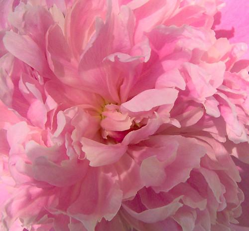 think pink !