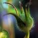 garden jester by Martha Catherine Ivey