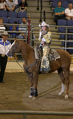 animal sports, rodeo, equestrianism, western riding, stallion, equestrian sport, sports, western pleasure, animal training, reining, horse, barrel racing,