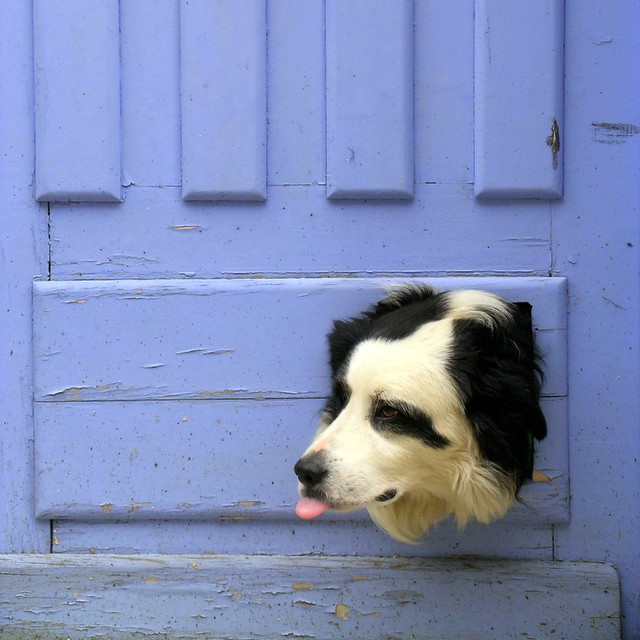 Dog and blue door