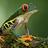 the #1 Nature & Wildlife Photographers Corner group icon