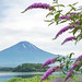 Fuji and Buddleia by shinichiro*