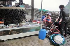 20150615 haenyeo divers shelling urchins