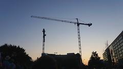 DC Dance of the Cranes 59091