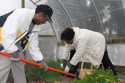 Lee and Linda Marshall harvesting herbs in the church's seasonal high tunnel