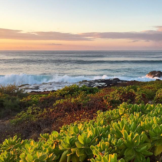 Bespoke #shirleyruns #seenonmyrun #irunoutside #kauai #paradise