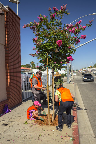 Huntington Park Tree Care - 7/25/15
