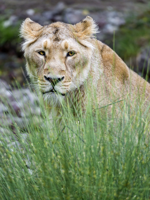 Jeevana behind the grasses