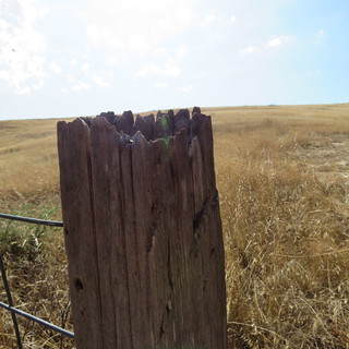 080115 Calvary Cemetery Bodega-47