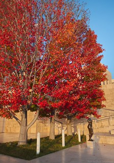 Fall Color over the Torso of Summer - Nikon D750 - AFS Nikkor 28-300mm 1:3.5-5.6G VR