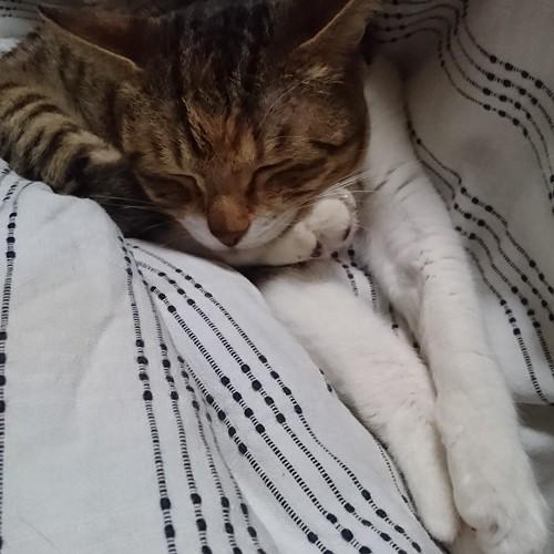 変な格好。寝難いんじゃないの by Chinobu