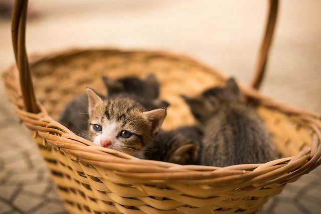 Sad cat in the basket
