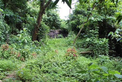 百年欖仁樹附近的自然樣貌。攝影:廖靜蕙
