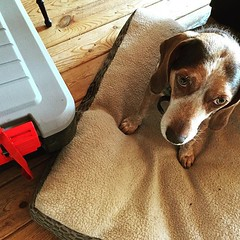 All packed up to move out today. Enjoy your new home, Basso! #fryed365 2015/183/365 #beaglelove
