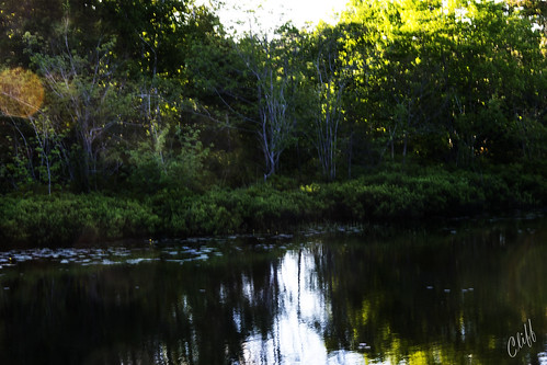 park trees toronto canada pond nikon novascotia halifax cliffhope
