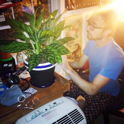 Chinese Evergreen Inspection (July 24 2014)