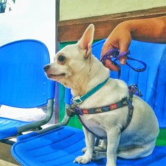 27TO34 #ResponsiblePetOwnership  Starting today, i promised that every first monday of the month should be Poppee's Veterinary Visit! I care poppee so much that i make sure he never missed a single visit, pero sorry na poppee busy lang gyud light si dadde