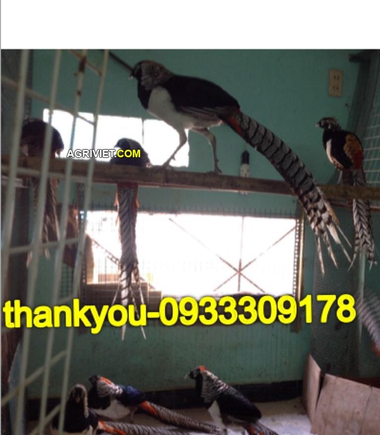 20063146891_7c4e6878ac_o.jpg