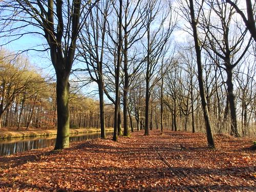 Bosques en Bélgica