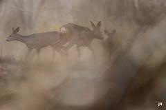 Rencontre dans le brouillard - Photo of Le Barp
