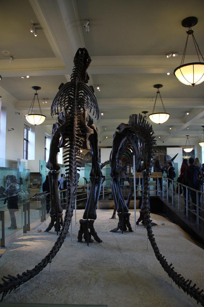 Natural History Museum Maputo