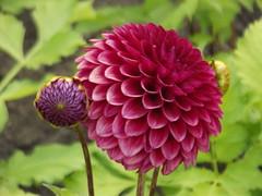 Dyffryn Gardens - South Front - flowers