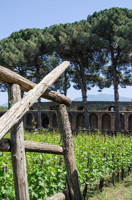 20150519-Pompeii-Amphitheatre-and-Vineyards-0548