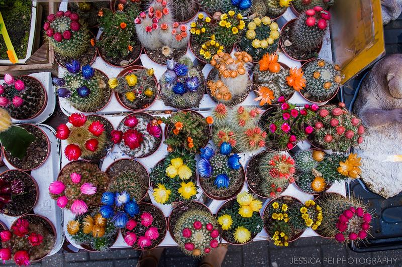 Amsterdam Bloemenmarkt Flower Market Cacti