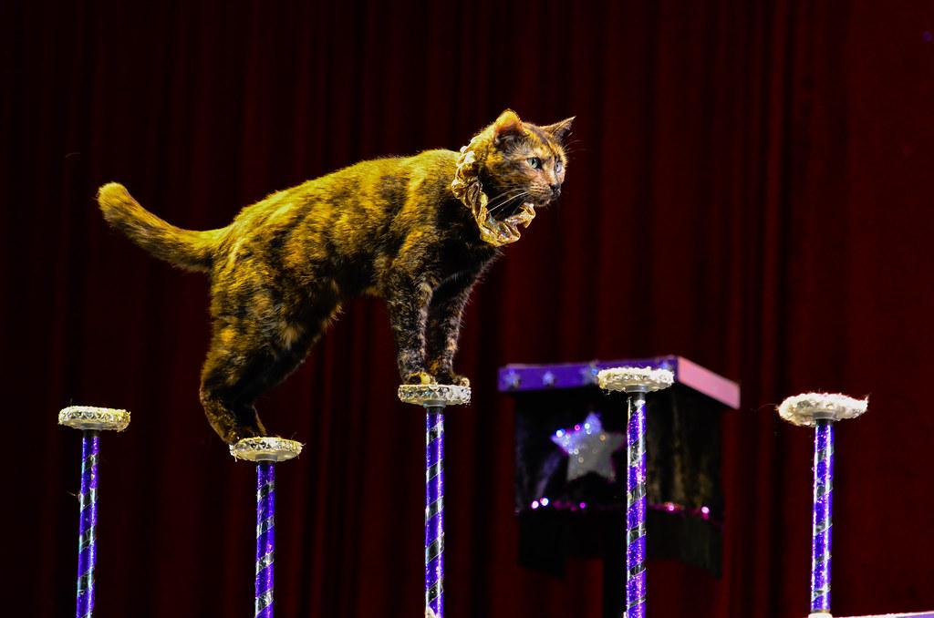 A cat balances on pedestals.