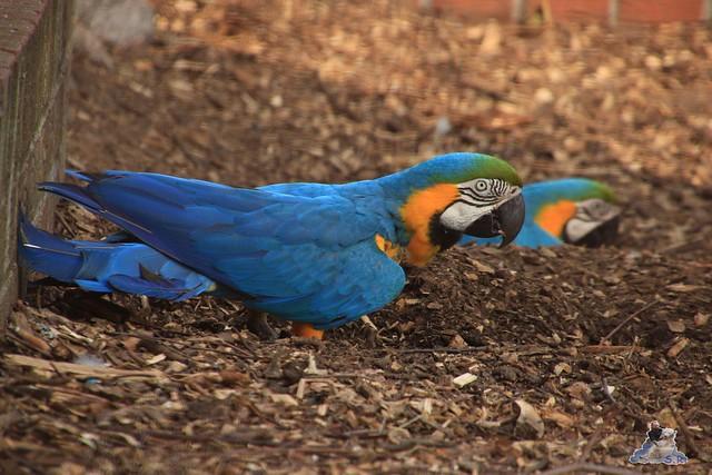 Tierpark Krüzen 03.07.2015  87