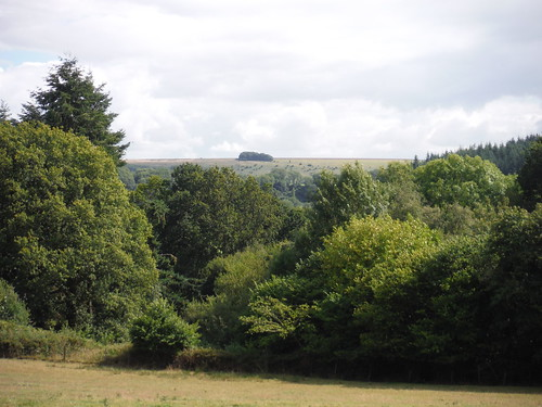 Swallowcliffe Down