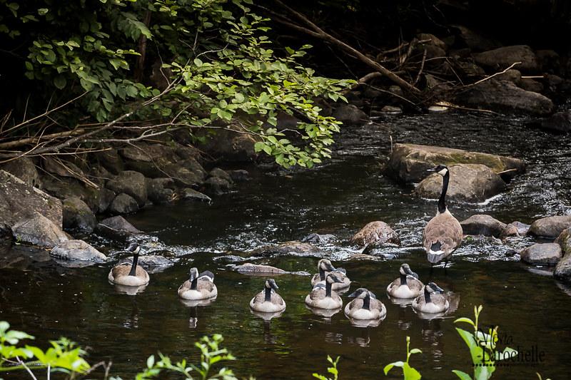 Une famille qui prend une pause dans notre ruisseau 19696322135_be1cf9c6e5_c