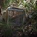Wetlands_010217_gnangarra-108