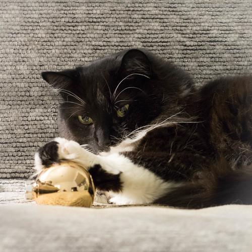 Christmas Cat: Playful Edition