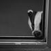 Snufkin by Dan Belton ( No Badger Cull )
