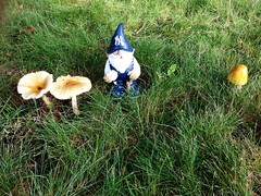 rain brings out the mushrooms and the gnomes
