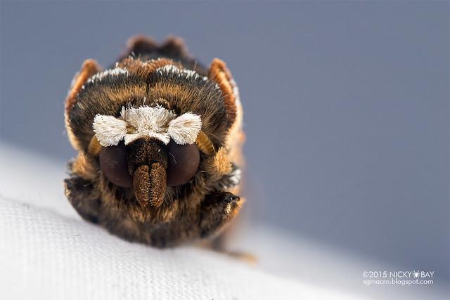 Moth - DSC_4691