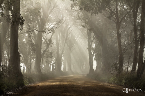 road morning trees light sunshine rural canon country rays shafts beams 70200mm eos60d