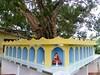 P1150098 Bodhi Baum