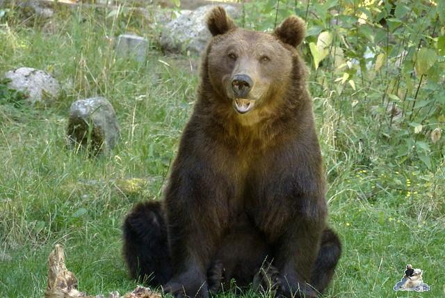 Tierpark Perleberg 09.08.2015 75