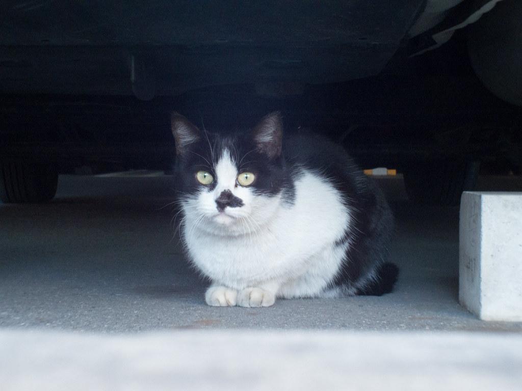 Stray cat f/5.6
